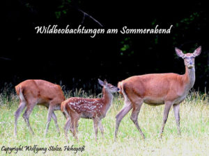 Wildbeobachtung im Sommer - Foto: Wolfgang Stolze